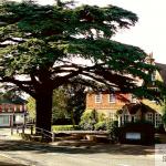 A view of Cedar Corner High St Caterham Hill, taken by Robert Warner